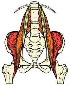 הפסואס- psoas -השריר הנעלם | צופית ארמן | מרכז טיליה לרפואה משלימה
