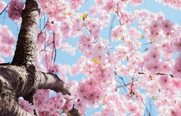 על אביב, פריחה ומה שביניהם – עונת האלרגיות בפתח