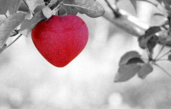 סדנת עיסוי לזוגות – שדרוג הזוגיות בתקשורת במגע