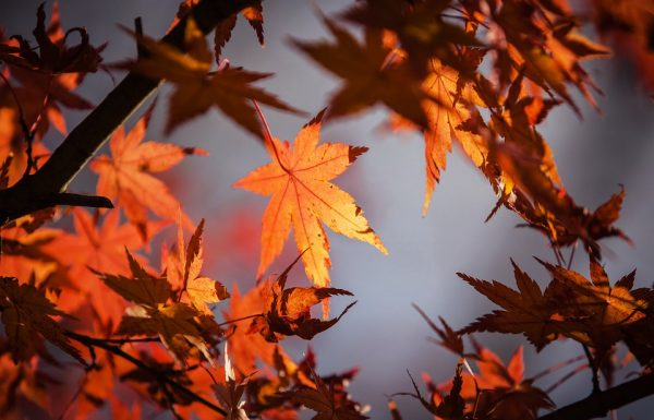 השיאצו בשירות הסתיו
