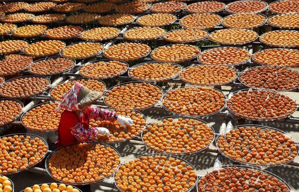השילוש הסיני הקדוש | תזונה