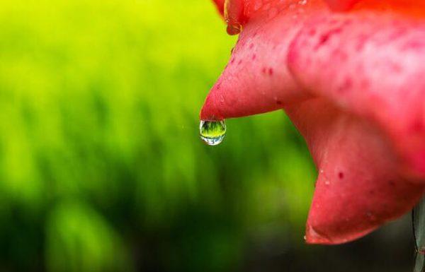מים ואהבה  סוף שבוע לנשים של נוכחות בגוף