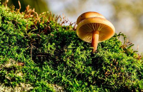 קנדידה טיפול טבעי – הידרוקולוניק